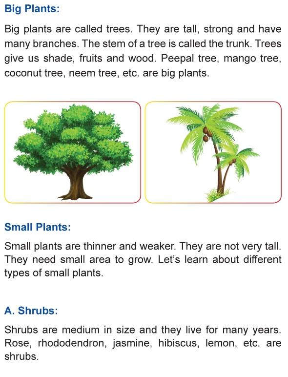 grade 1 science lesson 2 the plant kingdom primary science. Black Bedroom Furniture Sets. Home Design Ideas