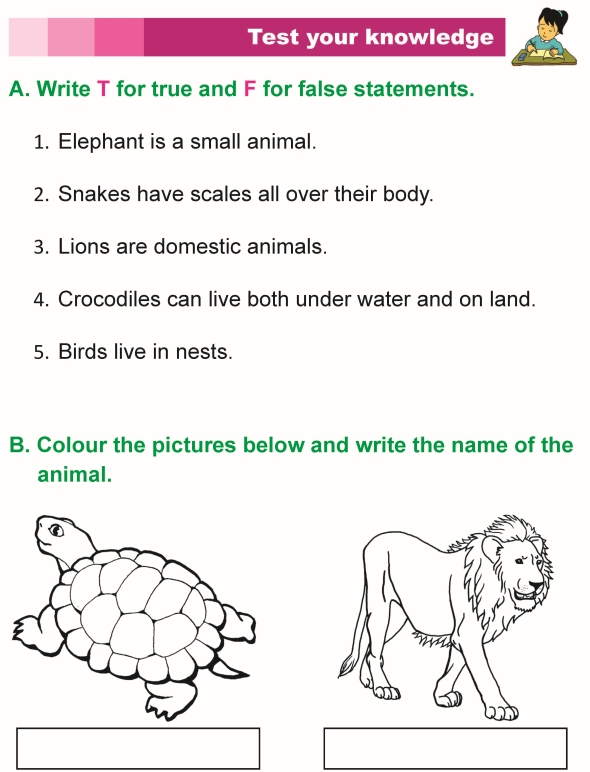 grade 1 science lesson 3 the animal kingdom primary science. Black Bedroom Furniture Sets. Home Design Ideas