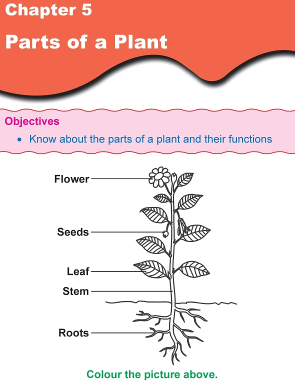 grade 1 science lesson 5 parts of a plant primary science. Black Bedroom Furniture Sets. Home Design Ideas