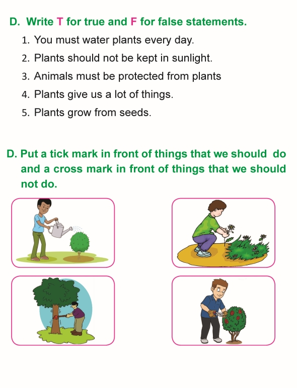 grade 1 science lesson 8 taking care of plants primary science. Black Bedroom Furniture Sets. Home Design Ideas